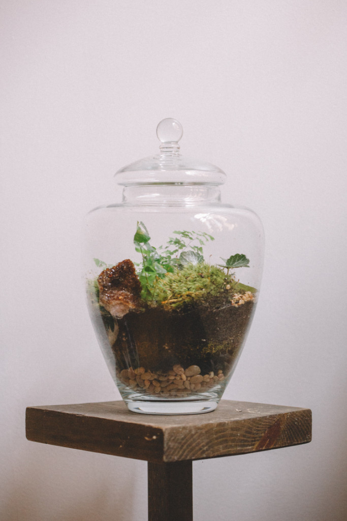 Flowers and Weeds - Miniature Forests in Enclosed Terrariums